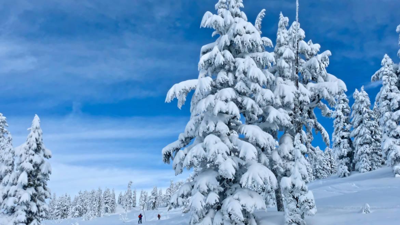Whistler Winter Wonderland